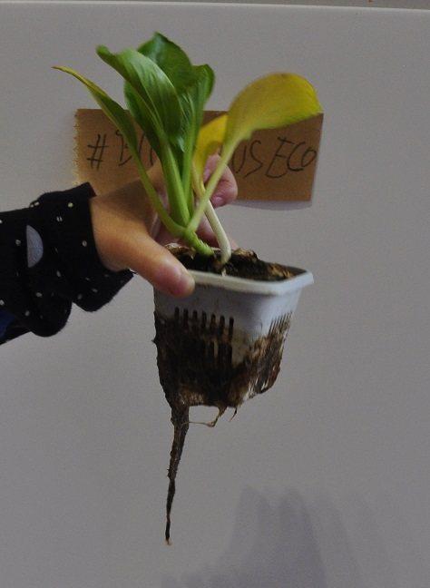 biohumus roots