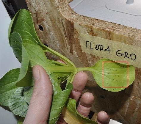flora gro_sick_plant