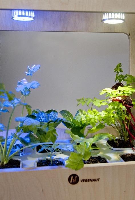 zestaw hydroponiczny wygląd